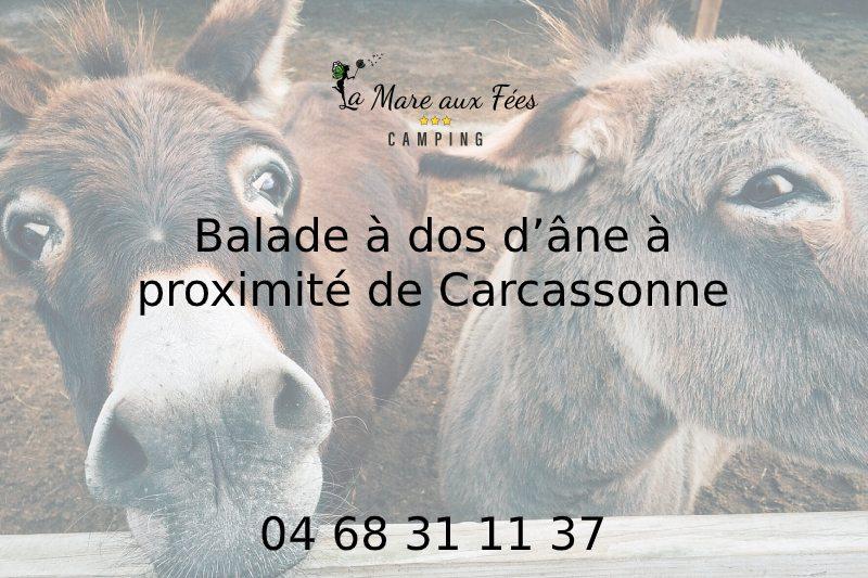 Balade à dos d'âne à proximité de Carcassonne | 04 68 31 11 37